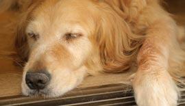 愛犬と向き合おう