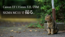 【Canon】 EF135mm F2L USM + SIGMA MC-11 で撮る。