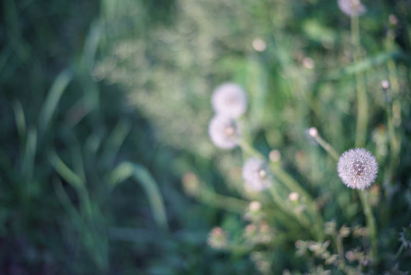 Leica (ライカ) ズミルックス M75mm F1.4