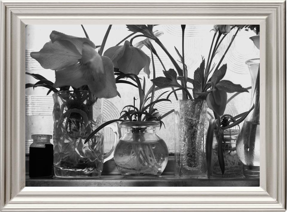 本日の写真「Leica M10 モノクローム + マクロエルマリート R60mm F2.8」