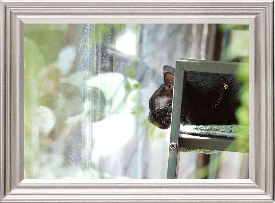 本日の写真「Leica M9 + ズミクロン M50mm F2 最短0.7m 2nd」