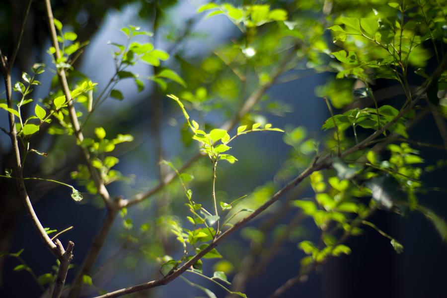 LEICA M9-P + Sonnetar 50mm/f1.1
