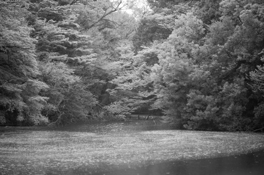 Leica M9-P + Nikkor P.C 8.5cm/f2.0