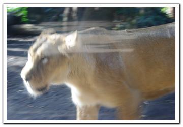 動物その1