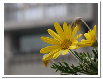 花(バックは都庁)