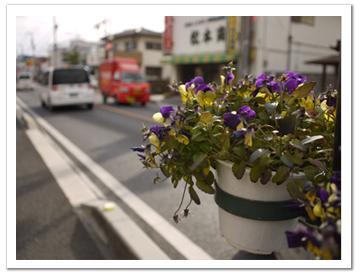 街道沿いの鉢